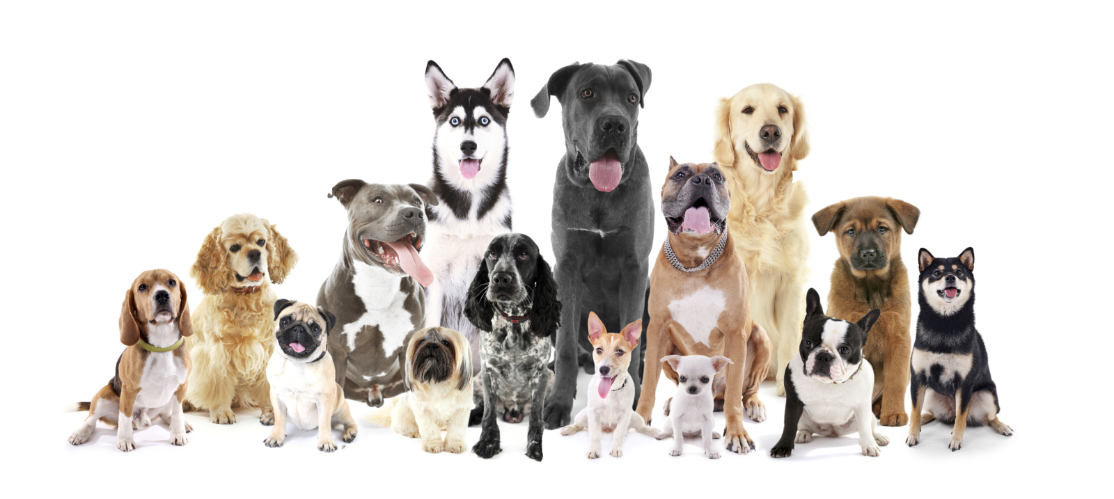Chesapeake Dog Training Llc